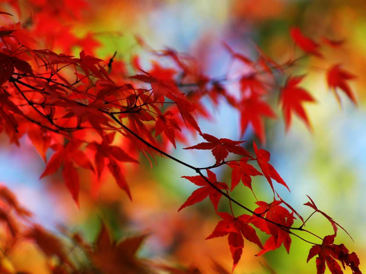 15_2014-10-09.jpg
