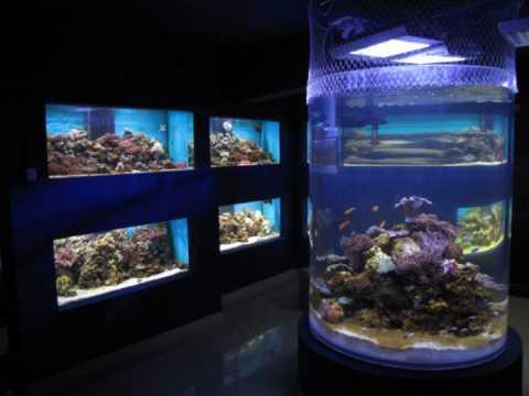 Centrul-Muzeal-Eco-Turistic-Delta-Dunarii-3-696x522.jpg